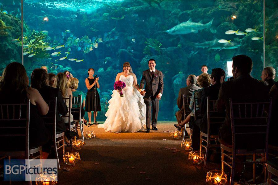 Congratulations Megan And Greg Beautiful Tampa Florida Aquarium Wedding Officiated By Charmaine Photo