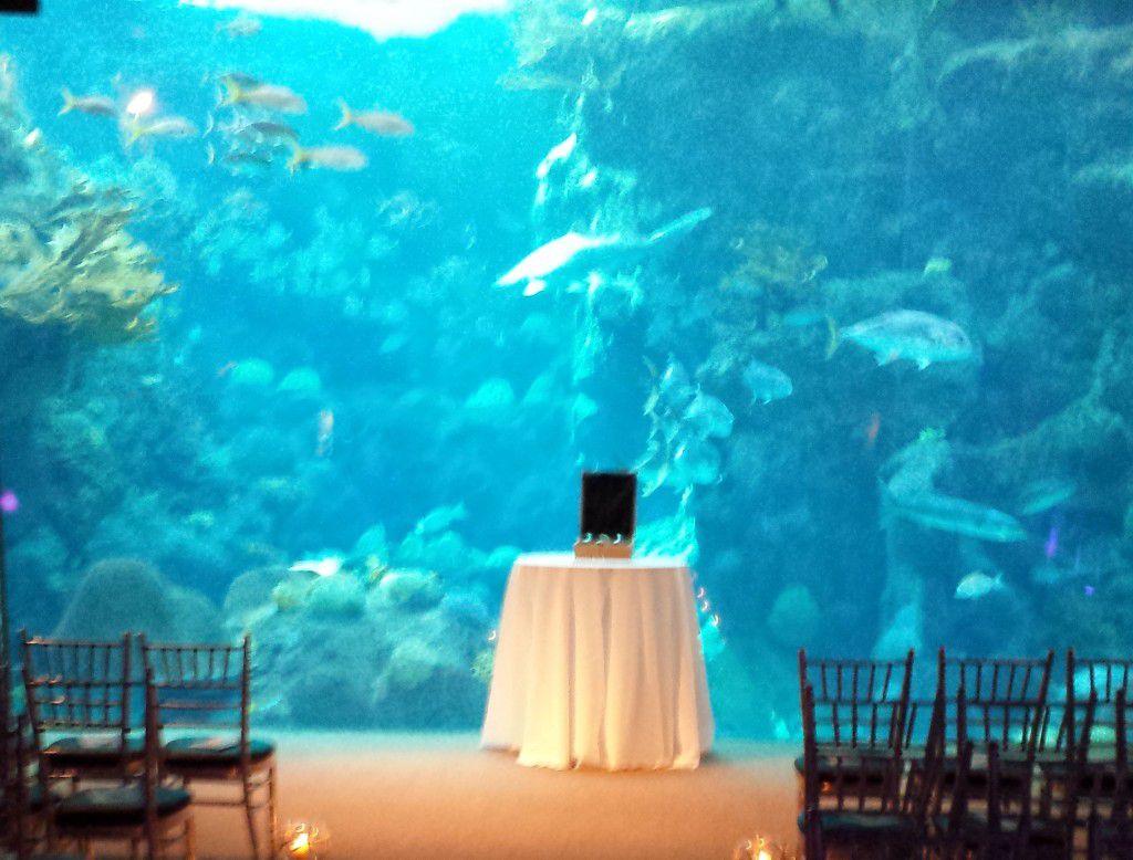 Wine & love letter ceremony at Florida Aquarium in Tampa