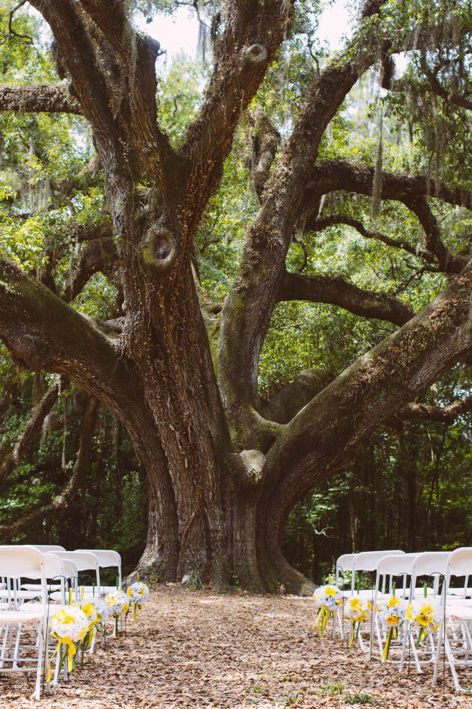 Gale and Kurtis' wedding ceremony all setup. Photo by Anna Hall Photography.