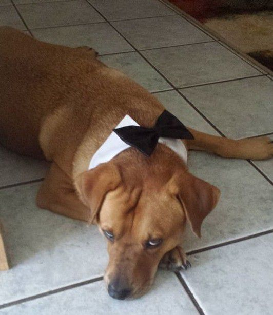 This sleepy dog was the best man at a wedding officiated by George Jr.