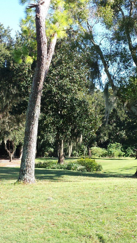 It was a picture perfect day for an outside wedding ceremony at Innisbrook Golf Resort