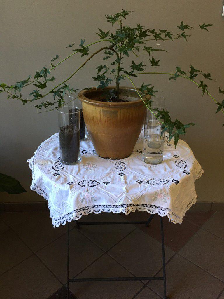 Unity Tree Planting Ceremony