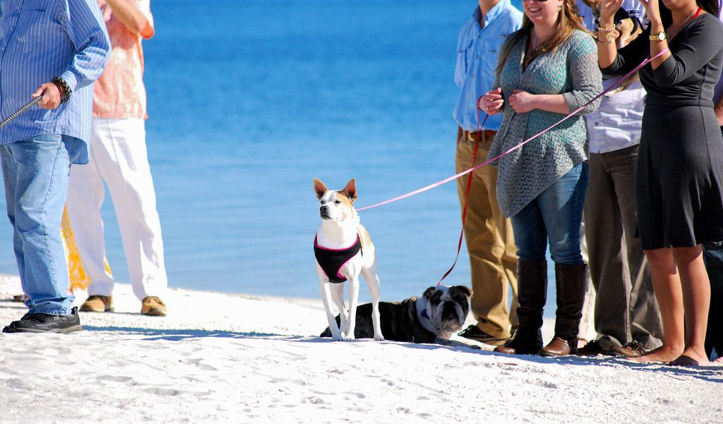 Ways to Include Your Dog in Your Wedding Ceremony